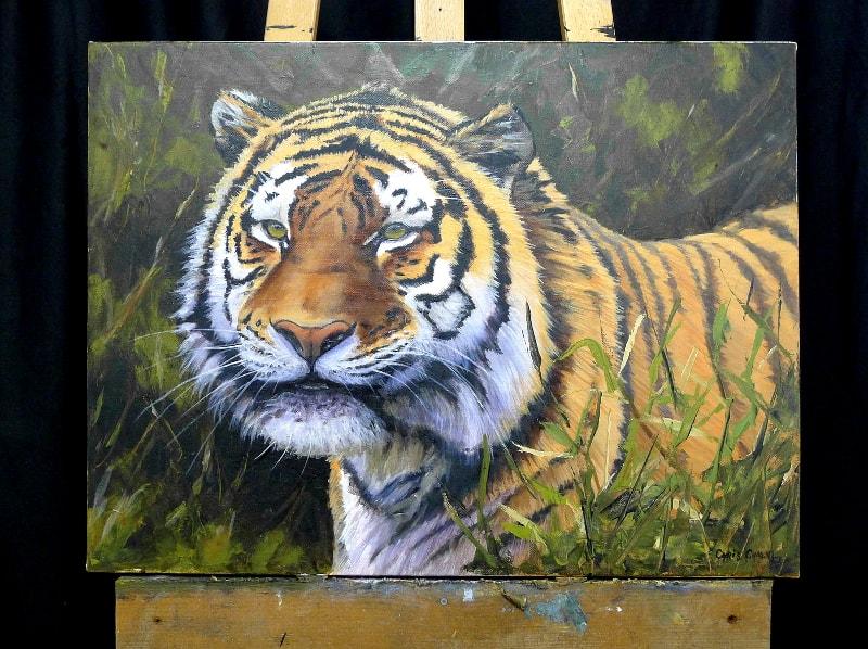 tiger bad crop