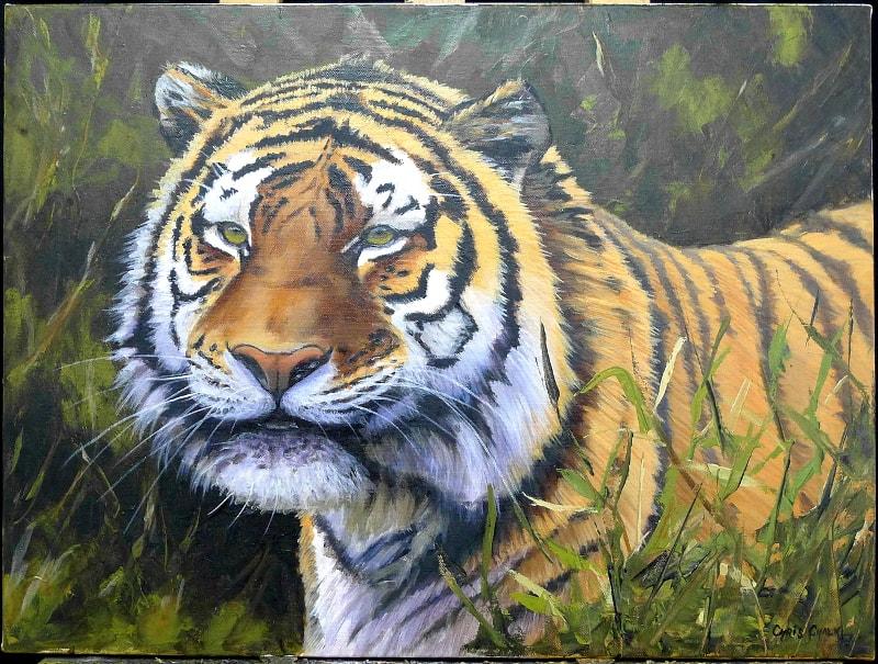 tiger good crop