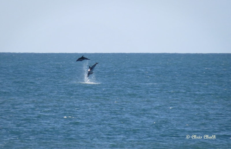 dolphin-photo-1