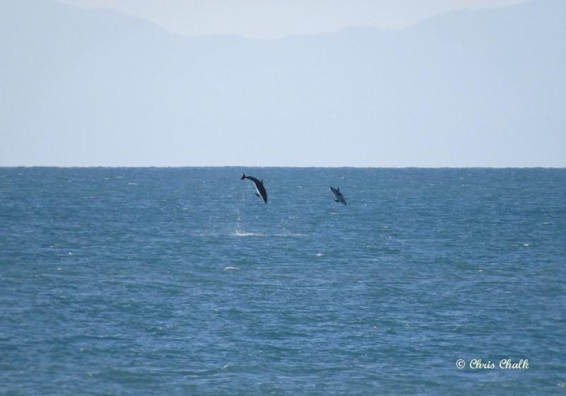 dolphin-photo-2