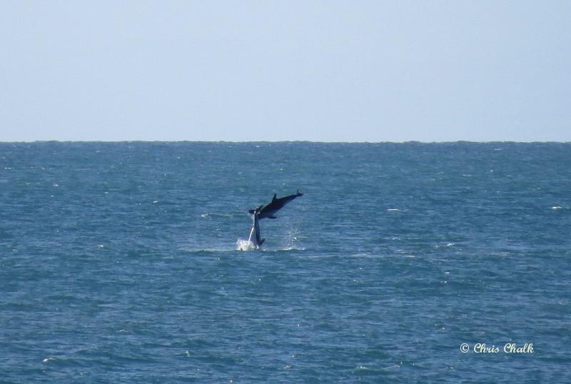 dolphin-photo-3