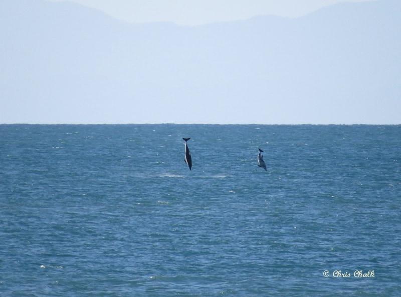 dolphin-photo-4