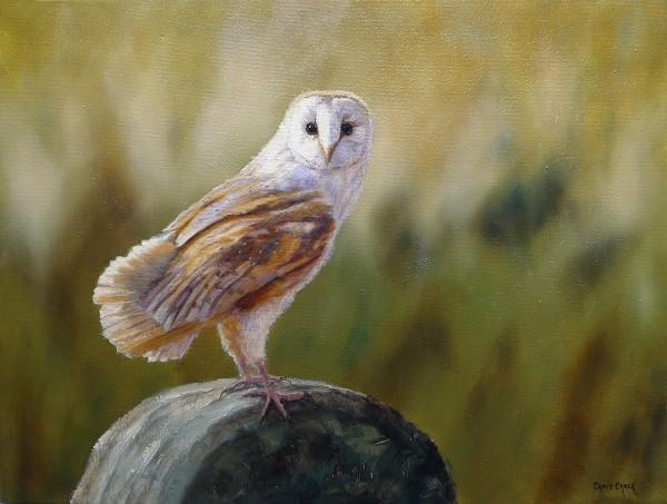 ban owl painting