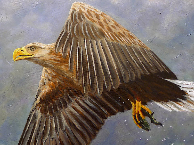 White Tailed Eagle painting