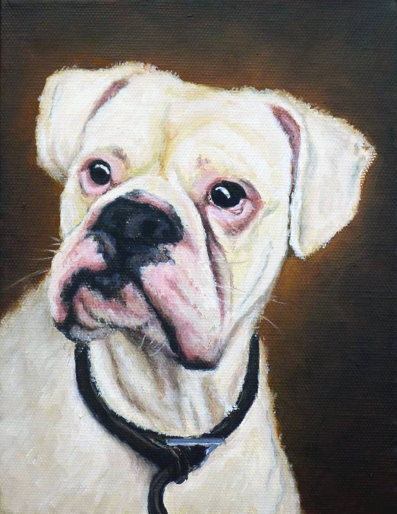 Boxer Dog pet painting in oils