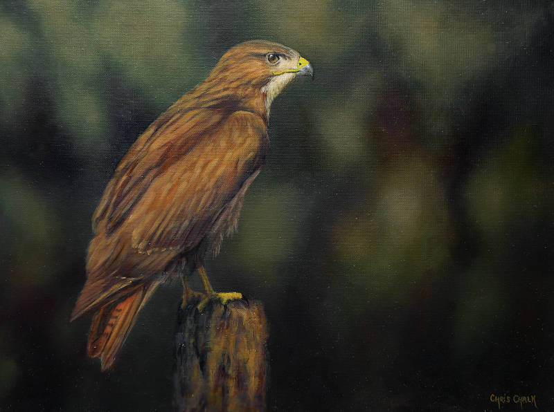 Buzzard painting, British