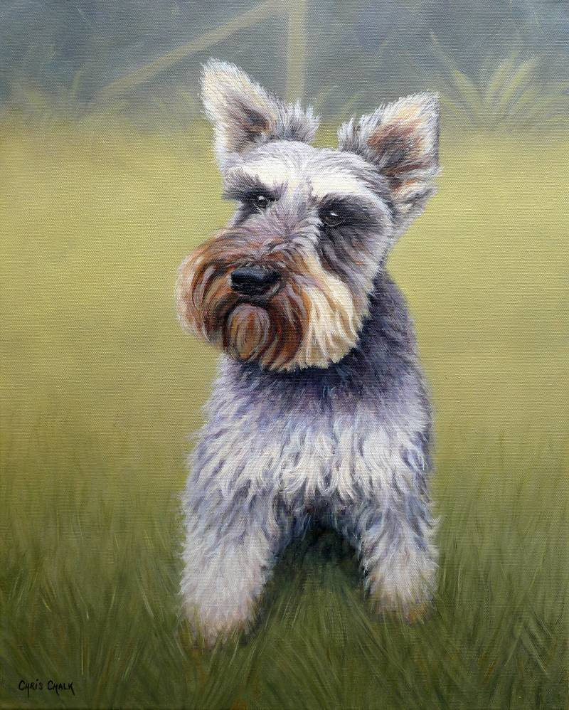 Dog pet portrait painting of a schnawzer
