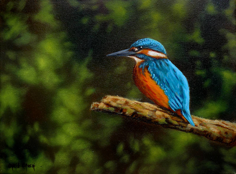 oil painting of a Kingfisher