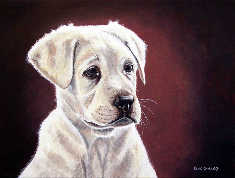 oil painting pet portrait of a Labrador puppy