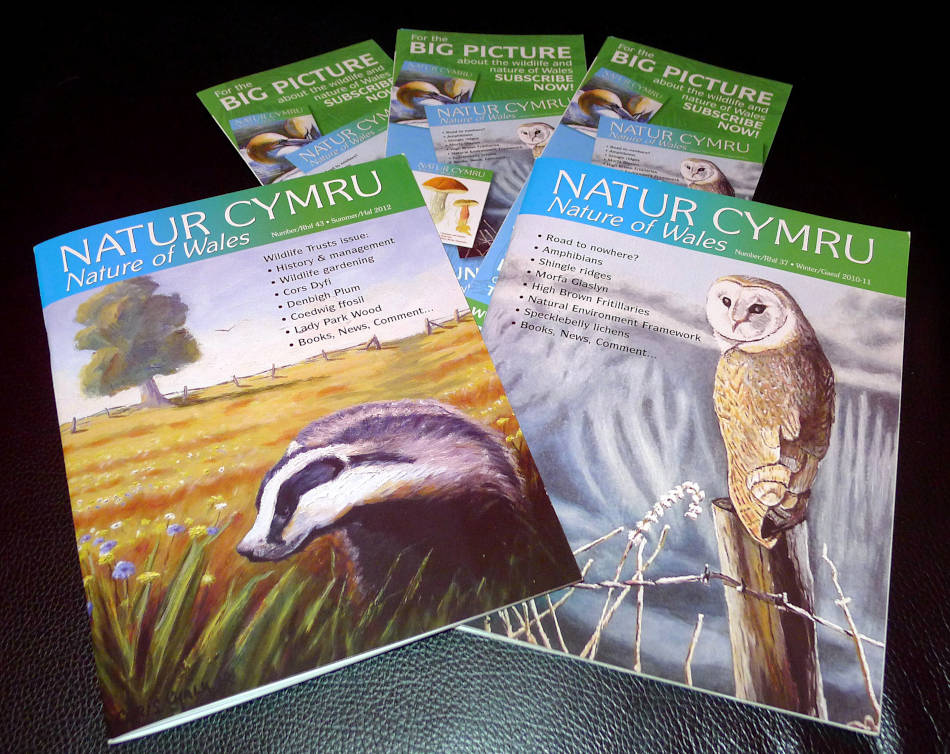 Natur Cymru magazine cover art by Chris Chalk