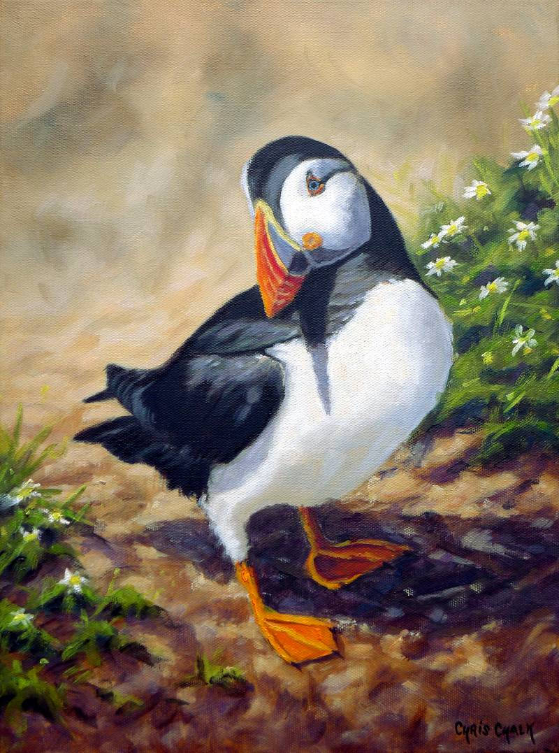 Welsh Puffin painting