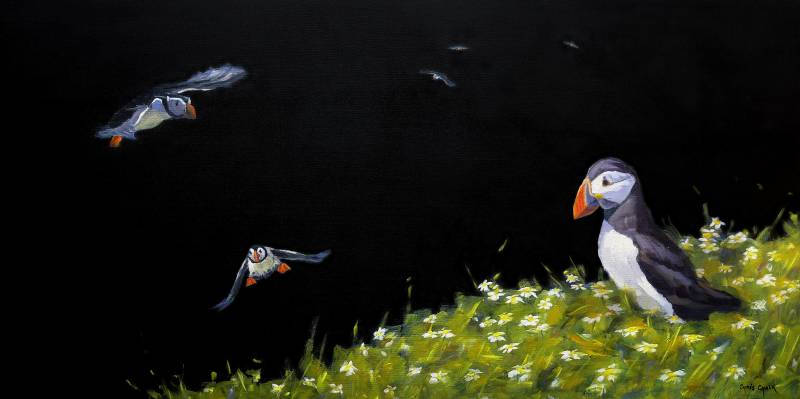 Puffins painting in oils