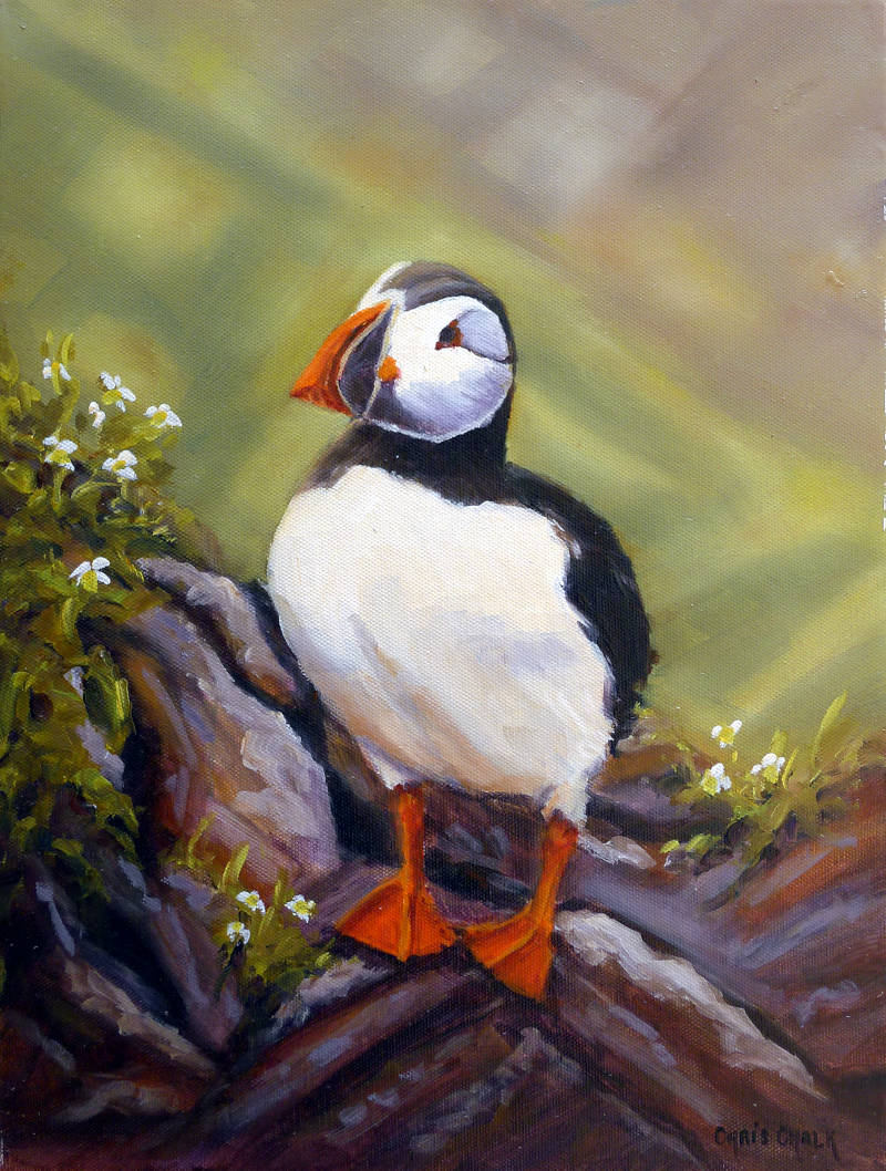 British Puffin painting
