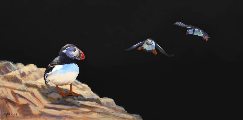 oil painting of three welsh puffins