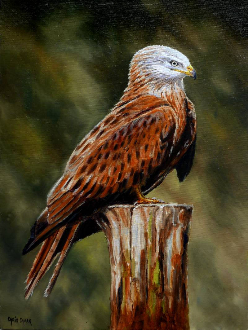 Red Kite painting