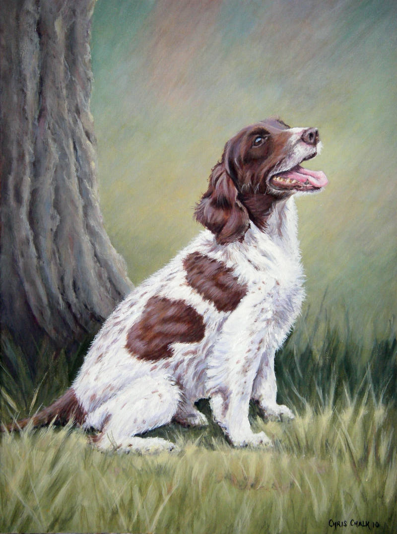 oil painting of a Spaniel dog pet portrait