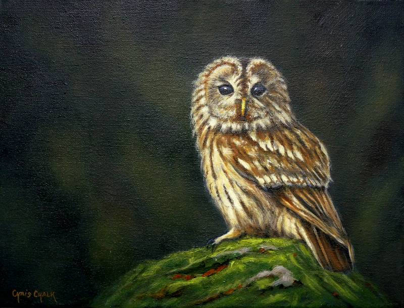 oil painting of a British Tawny owl