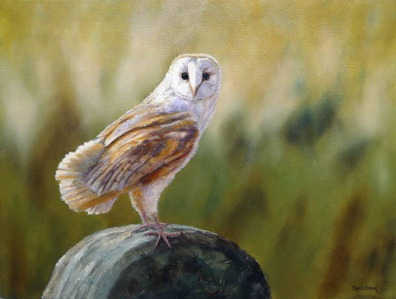Barn Owl bird of prey painting
