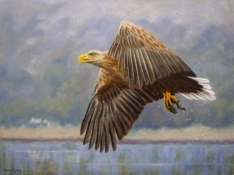 White tailed sea eagle Painting